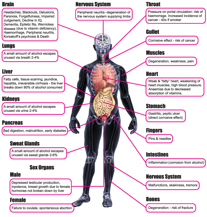 Effects of Alcohol on the Body Diagram