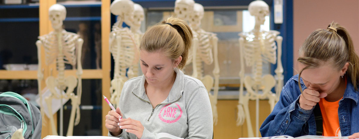 Students studying anatomy models in Study Center